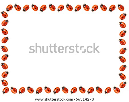 Ladybugs frame over white background - stock photo