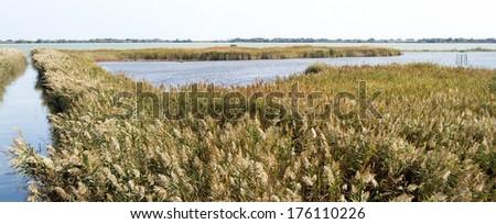 Lagoon landscape of Camargue, France - stock photo