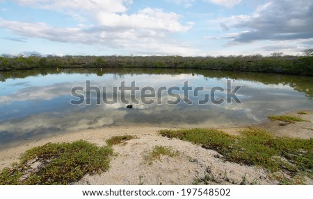 Lagoon of Bachas beach with pink greater flamingos (Phoenicopterus ruber) in Santa Cuz, Galapagos, Ecuador - stock photo