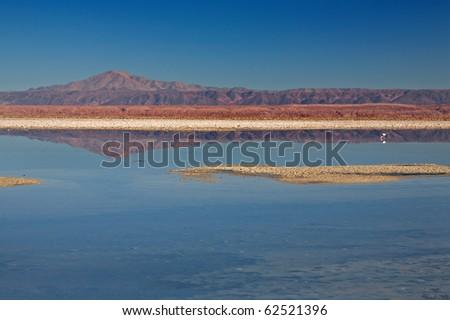Laguna Chaxa in Salar de Atcama, Chile - stock photo