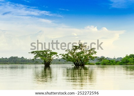 Laguna Grande Cuyabeno against cloudy sky,Macrolobium acaciifolium tree, powerfull polarizer filter - stock photo