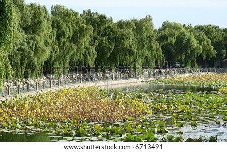 Lake and willows in China park - stock photo