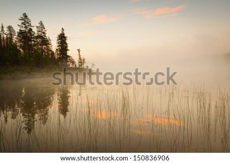 lake, fog and tree at sunrise - stock photo