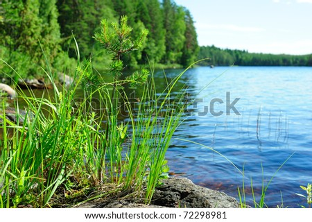 Lake, forest and young pine-tree growing from the stone - stock photo