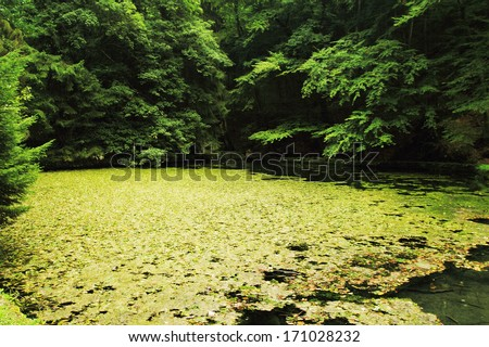 lake in deep forest - Hungary