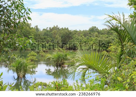 Lake in the jungle
