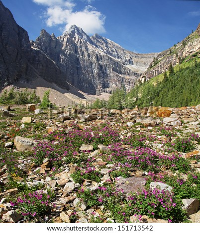 Lake Louise, Banff National Park, Alberta, Canada. View of flowers and Mount Whtye on the trail to the   Bee Hive and hikes beyond. - stock photo