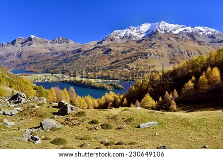 Lake Sils surrounded by fall colored larches in the upper Engadin. Piz Corvatsch with a snowy Peak.