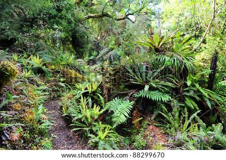 Lake Waikaremoana Great Walk, New Zealand - stock photo