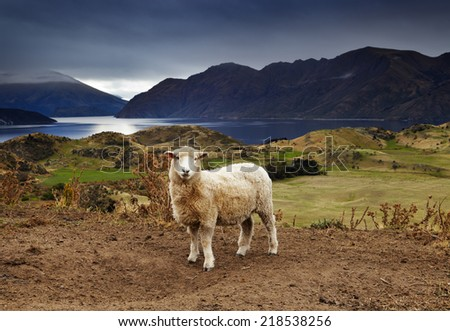 Lake Wanaka, view from mount Roys, New Zealand - stock photo