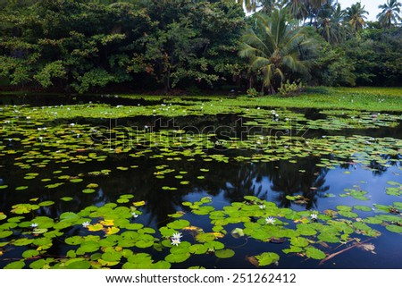 Lake with beautiful blooming water lilies in a tropical setting  - stock photo