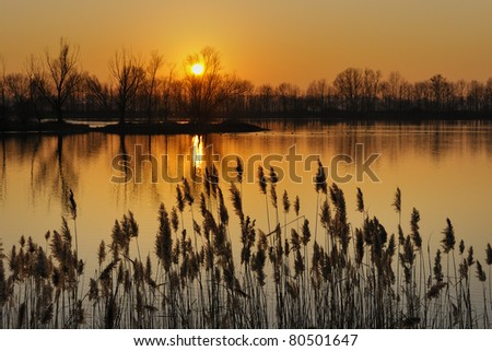 Lake with reed bed at sunrise - stock photo