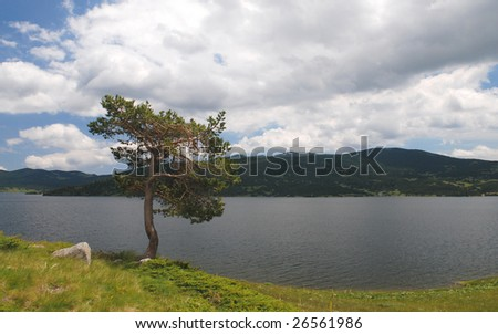 Lake with tree and blue cloudy sky