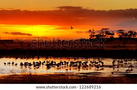 Lakeside Habitat Sunset, Victoria, Australia - stock photo