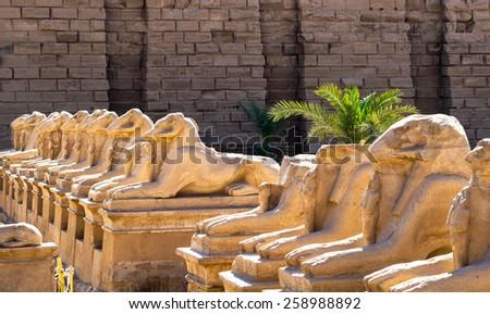 Lamb-head Sphinxes in Luxor, Egypt famous landmark. Ancient Egypt statues of sphinx in Karnak Temple. - stock photo
