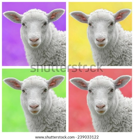 Lamb in colorful pop art style, four lambfaces in a square format - stock photo