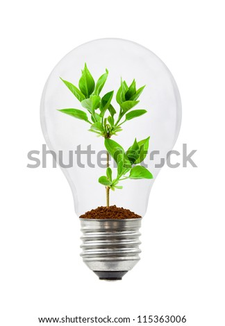Lamp and plant isolated on white background - stock photo