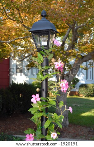 Lamp Post with Mandevilla in full bloom - stock photo