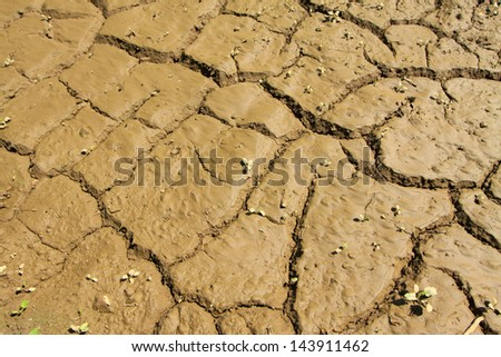 land after flood in the wild , closeup of photo - stock photo