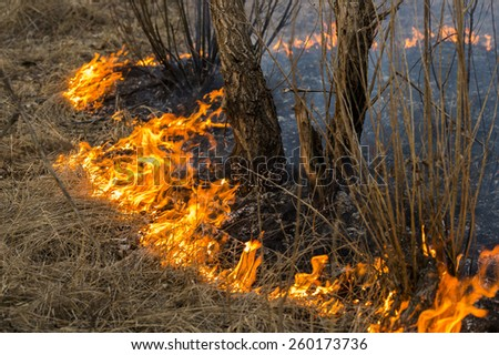 land and forest fire after the spring - stock photo