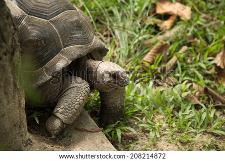 Land Turtle crawl in nature. - stock photo