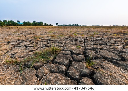 Land with dry and cracked ground at rice field after harvest with young green grass. - stock photo