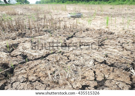 Land with dry cracked ground. - stock photo