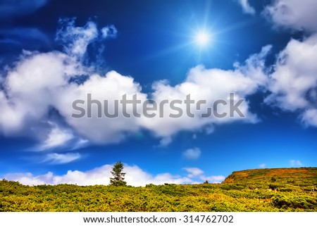 Landscape alone tree and field of green fresh grass under blue sky and sun. Dramatic scene