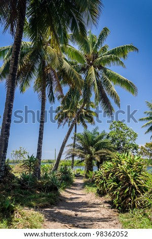 Landscape along the Pangalanes channel, eastern Madagascar - stock photo