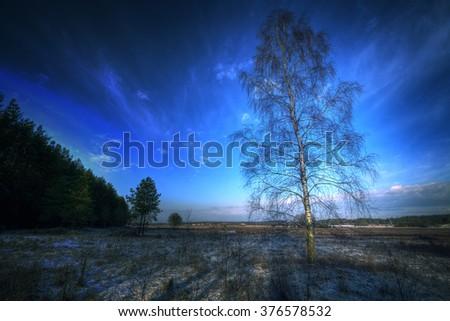 Landscape - birch-tree in winter time - stock photo