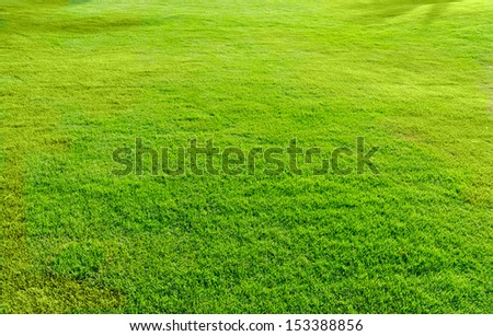 landscape covered with green grass - stock photo