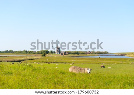 Landscape Dutch wadden island Texel with water of the nature Waagejot, windmill and typical sheep