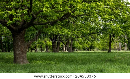 Landscape, early spring in the forest. - stock photo