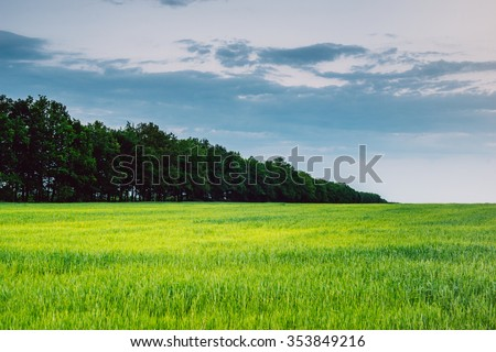 landscape field summer, planting of trees and green fields