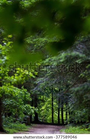 Landscape forest in denmark in the summer - stock photo