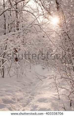 Landscape.frozen snowy road.Winter sun.Winter wood. - stock photo