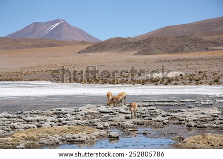 Landscape in Andes of Bolivia with volcano, lagoon and Vicunas - stock photo