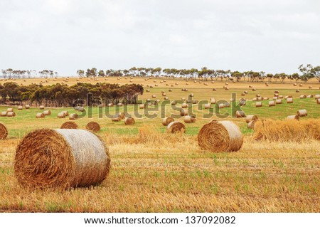 landscape in Australia., Hay and straw bales in the end of summer. Western Australia. - stock photo