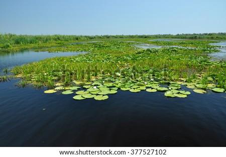 Landscape in Danube delta, Romania - stock photo
