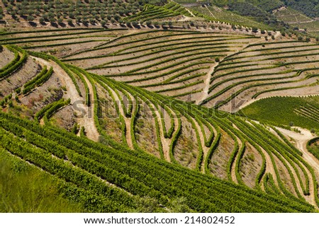 Landscape in Douro Valley - stock photo