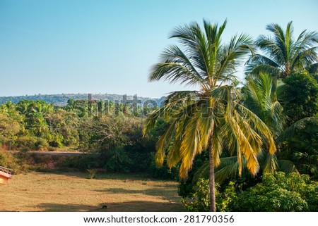 Landscape in India. Palm and sky. - stock photo