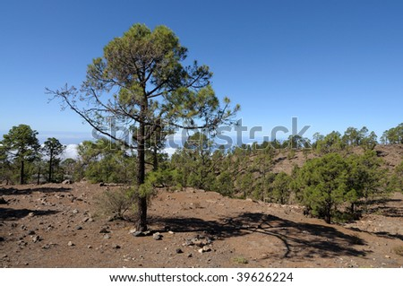 Landscape in Teide National Park. Canary Island Tenerife, Spain