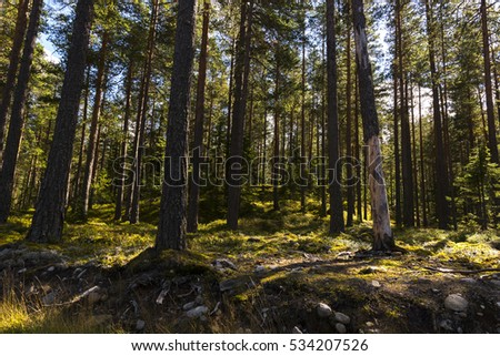 landscape in the forests of Norway