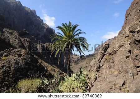 Landscape in the Masca valley. Canary Island Tenerife, Spain