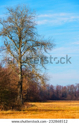 landscape, large tree in a forest autumn season