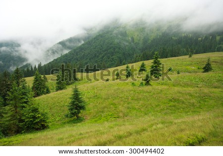Landscape mountain forest on a rainy day covered in a haze of fog - stock photo