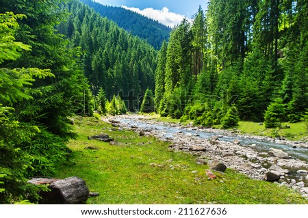 Landscape mountain river in the coniferous forest. - stock photo