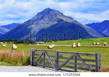 Landscape of a farm with yellow wheat rolls a in Otago, New Zealand. - stock photo