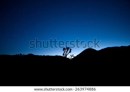 Landscape of a Joshua Tree silhouette against a blue twilight sky - stock photo