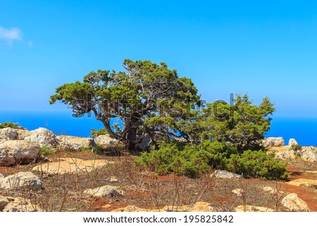 Landscape of Akamas Peninsula National Park, Cyprus